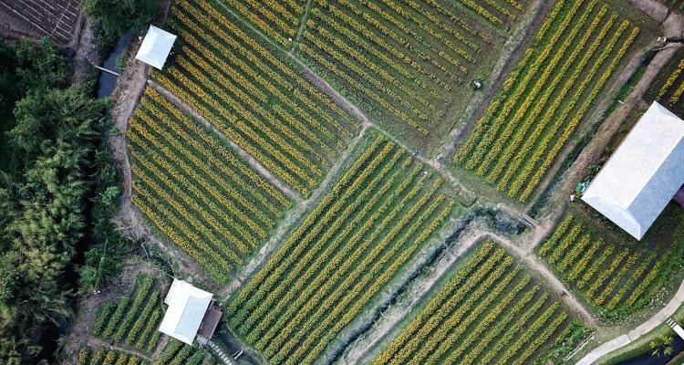 Dynamic aerial crop view